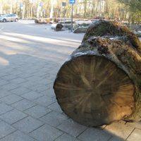 Opnieuw uitstel van de 3500-bomenkap